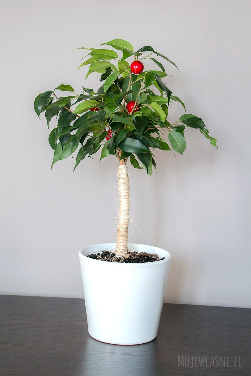 jak-zrobić-drzewko