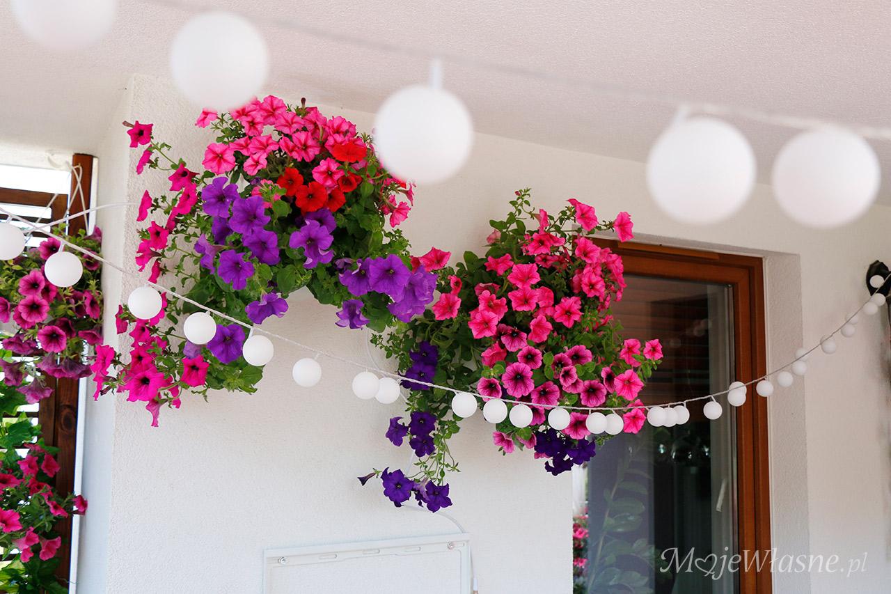 surfinie, kwiaty balkonowe