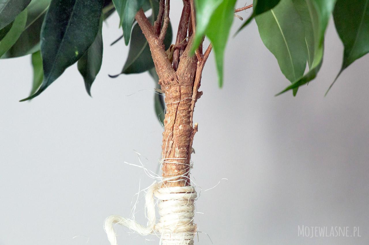Jak zrobić drzewko?